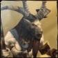 Grimiku's avatar