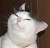 Redcrosse's avatar