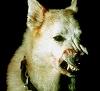 Artemissed1268's avatar