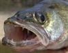 Walleye's avatar