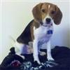 Keiser's avatar
