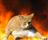 KaiserQwerty's avatar