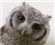 Moondude's avatar