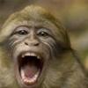 Swampmonkey5's avatar