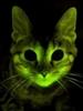 Rhou's avatar