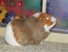 tychoblu's avatar