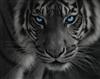 Valmir's avatar