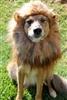 dog that looks human - HD1333×2000