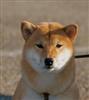 Kazimir_San's avatar