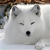 zirkaloy's avatar
