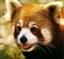 Red_Panda1's avatar