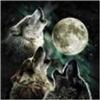 Wolfson's avatar
